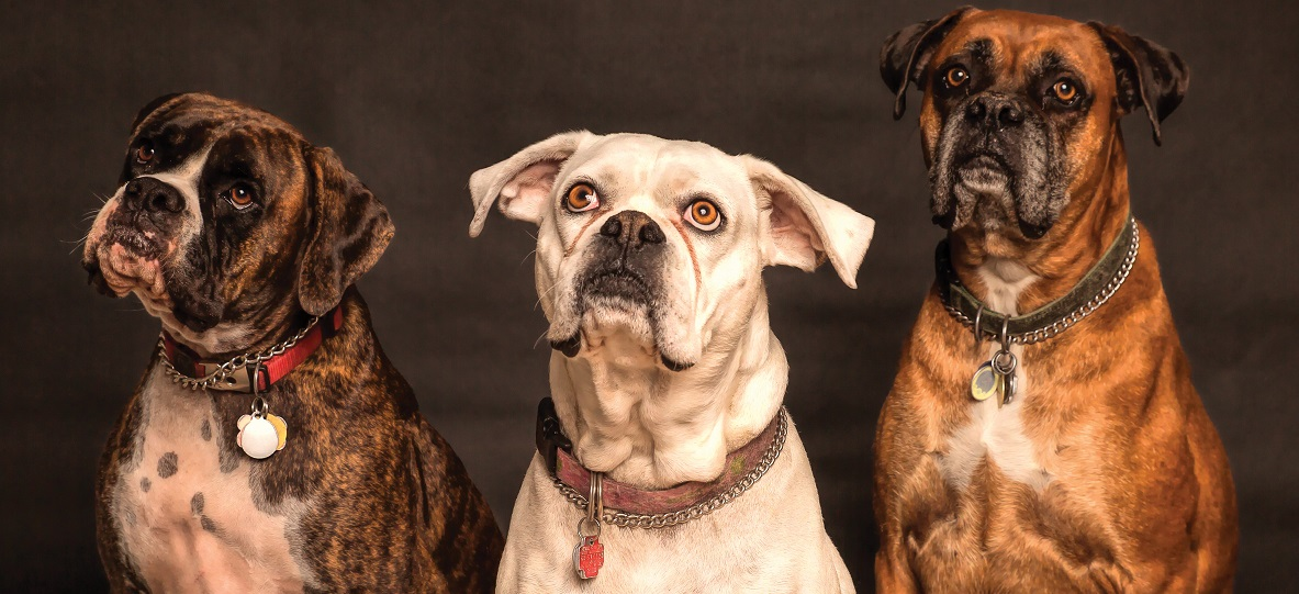 Older dogs with arthritis Silver Magazine www.silvermagazine.co.uk