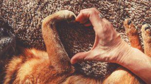 What to do about dog arthritis Silver Magazine www.silvermagazine.co.uk