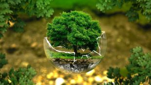 How to be greener Earth Day on Silver Magazine www.silvermagazine.co.uk