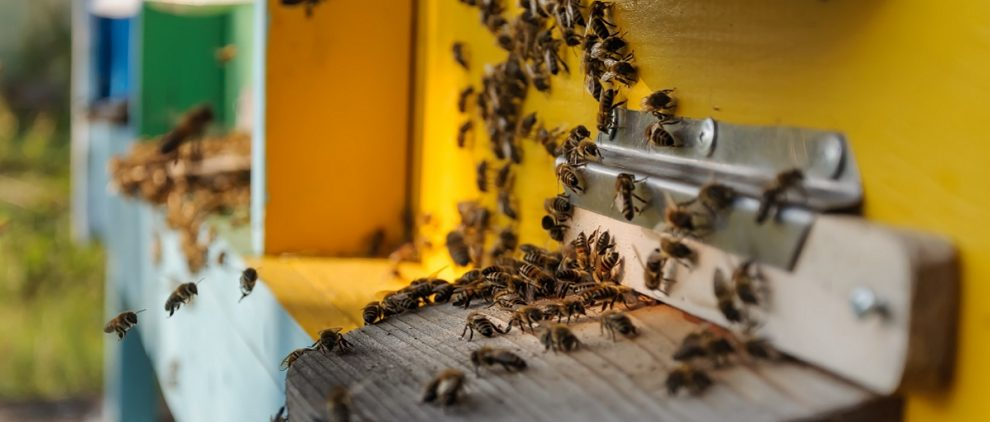 How to start your own beehive - article Silver Magazine www.silvermagazine.co.uk
